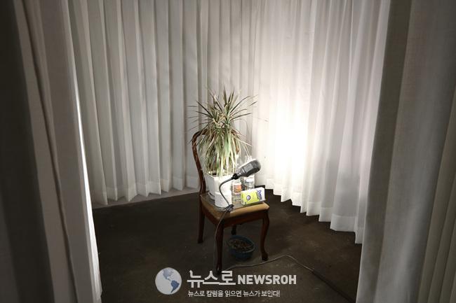 Curtain Room 2.jpg