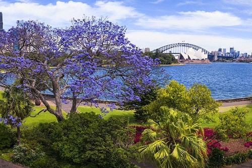 9 Royal Botanic Garden.jpg