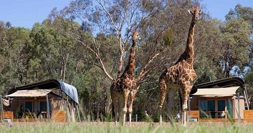 20 Taronga Zoo.jpg