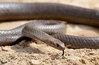 매거진(7 snakes).jpg