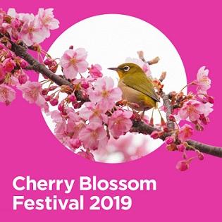 웟츠온(CherryBlossomFestival).jpg