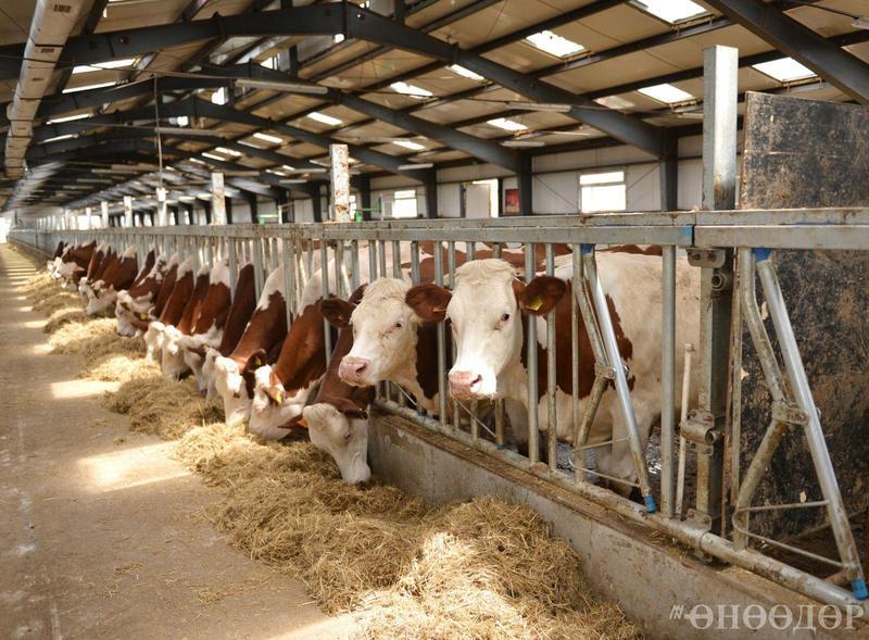 17만 마리의 가축 원산지 확인제.jpg