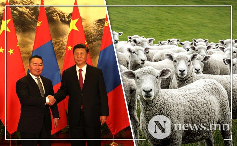 중국으로 인도될 양은 헹티와 수흐바타르 아이막에서 준비하고 있어.jpg