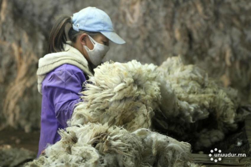 양털 1kg당 1500~2000투그릭 보조금 지원.jpg