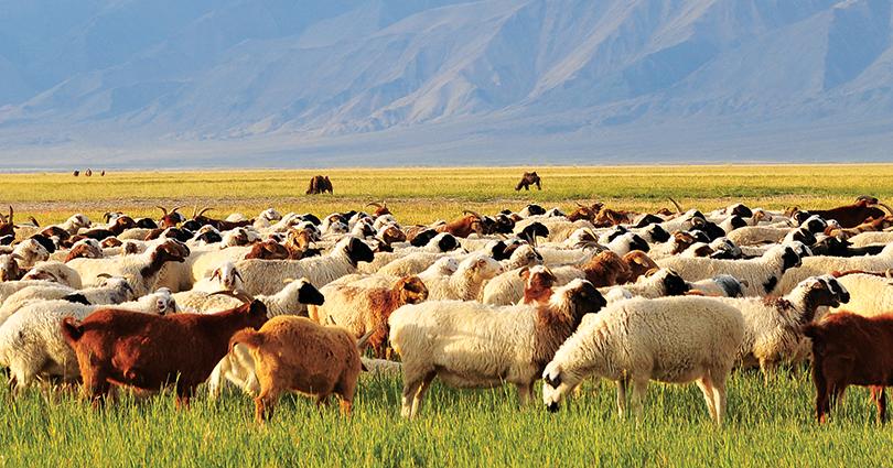 가축 세금 제도를 U.Khurelksukh 정부가 재개할지 주목.png