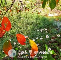 가을입니다