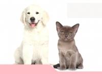 성장하는 애완동물 시장