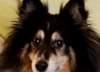 철학자 강아지 렉스