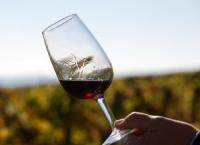 프랑스 와인 자습서 – 와인 마시기와 와인 시음하기(1)