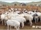 몽골 식량농업경공업부, 라오스에 양 1,000마리 기증