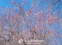 봄이다..벌써 일년