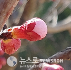 톡톡 터지는 꽃망울