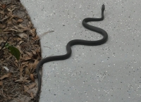 뱀과 함께 살아가기