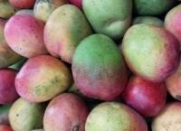 망고 시즌, 영양분 많은 과일 즐기자