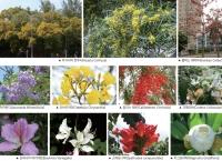 """홍콩과 연애하는 이유 : 꽃들의 천국 """"Common Flowering Trees in Spring (March to May)"""""""