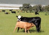 뉴질랜드 기후변화 대응 '낙제' 수준