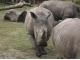 동물원의 코뿔소 뿔까지 베어가는 나쁜 밀렵꾼들...