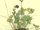 그랑팔레에서 펼치는 꽃과 나비의 축제