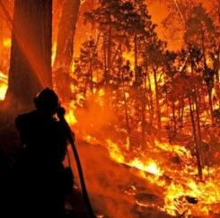 불타는 캘리포니아