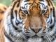 44년 간 야생 동물 60%가 사라졌다