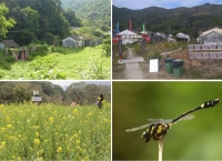 """[홍콩] 기자의 눈 - 홍콩의 숨겨진 동식물낙원  """"샤로퉁 Sha Lo Tung"""" A Long Road to Conservation"""