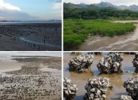 [구석구석 홍콩여행] 팍 나이 해변 (Pak Nai in Yuen Long)-자연습지와 굴 양식장